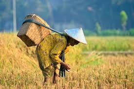 Mengapa Indonesia perlu dorong petani alih profesi? Pentingnya ...
